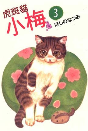 虎斑貓小梅(3)
