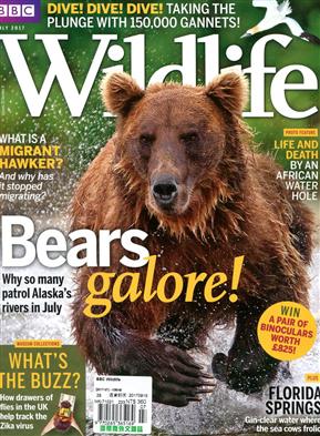 BBC Wildlife 7月号/2017